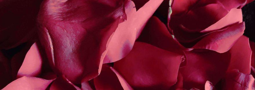 Hojas de rosa roja