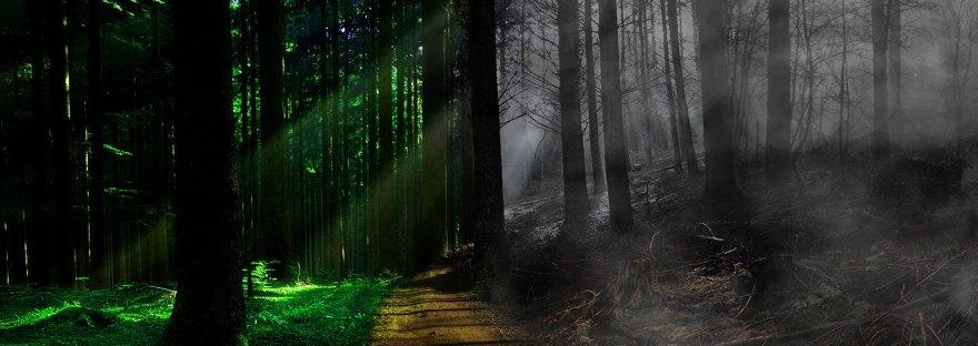 Bosque que define la muerte y la vida